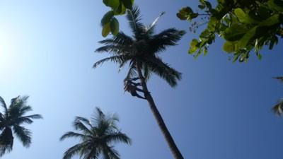 palm5.JPG