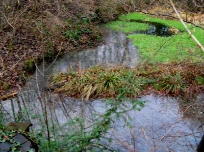Meandering water