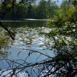 Amsoldingen lake