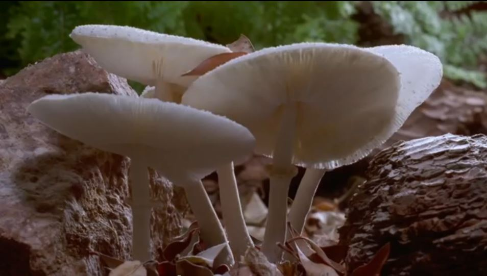 Fantastic Fungi_The_Spirit_of_Good