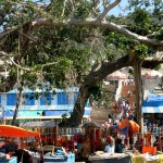 The huge banyan tree: now the whole place is covered by asphalt, and some new buildings around