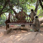 Monkeys playing on a bench